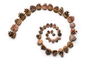 HCY spiral fibonacci-cones